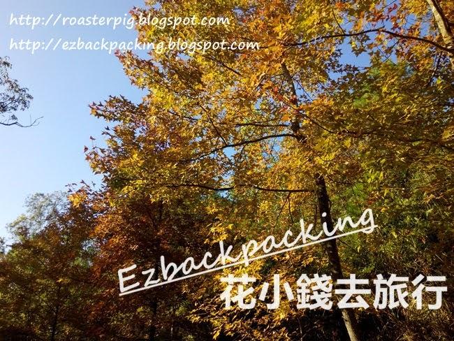 楓香林紅葉