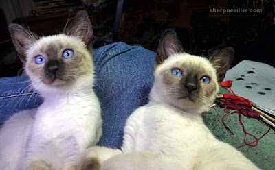 Two Siamese kittens preparing to attack a scissors fob.