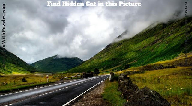 Finding hidden cat picture puzzle