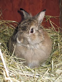 Rabbit Food: 2013