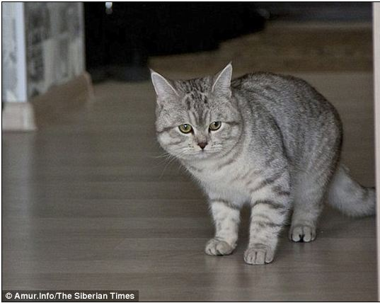Charles Utkins The Psychic Cat
