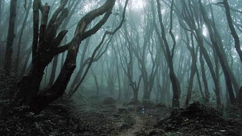4. Hoia-Baciu Forest, Romania - 5 Fairytale Forests Straight Out of a Story Book