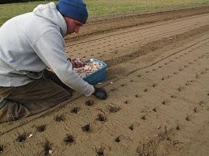 Mancala Seeds