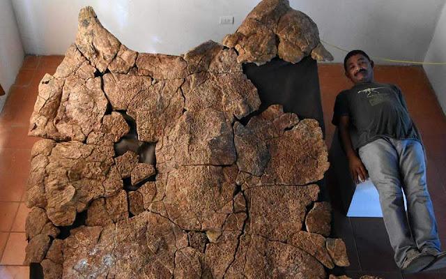 Ανακαλύφθηκαν απολιθώματα γιγάντιας χελώνας του γλυκού νερού με μέγεθος αυτοκινήτου