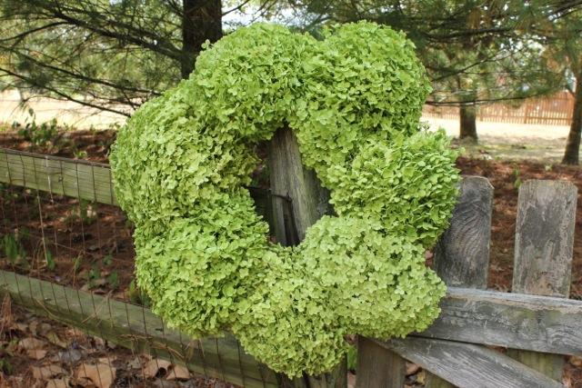 fresh hydrangea wreath