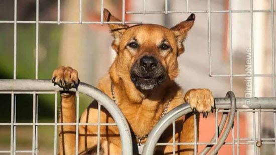 animais parte acao judicial decisao inedita