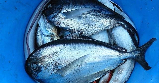 Acuicultura cria de peces en estanques naturales o for Criadero de pescado tilapia