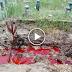 """Henti Sebar Video 'Kubur Berdarah'"""" Ia Mengaibkan Jenazah Dan keluarga"""