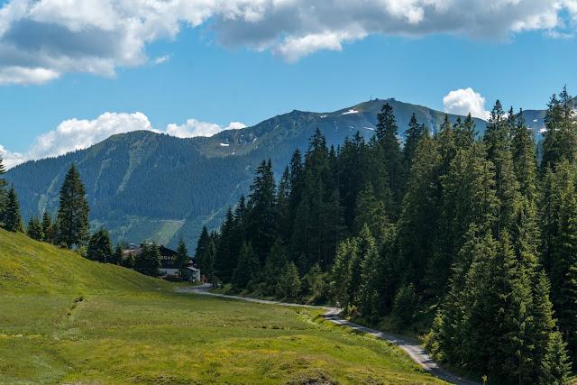 Waldwandern in Saalbach | Wanderung zu den Waldteichen am Maisereck | Saalbach - Maisalm - Wirtsalm - Waldteiche - Spielberghaus - Saalbach | Wandern-SalzburgerLand 16
