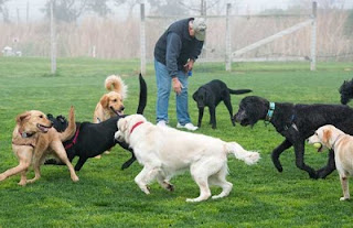 Choose Dog Training Carmichael