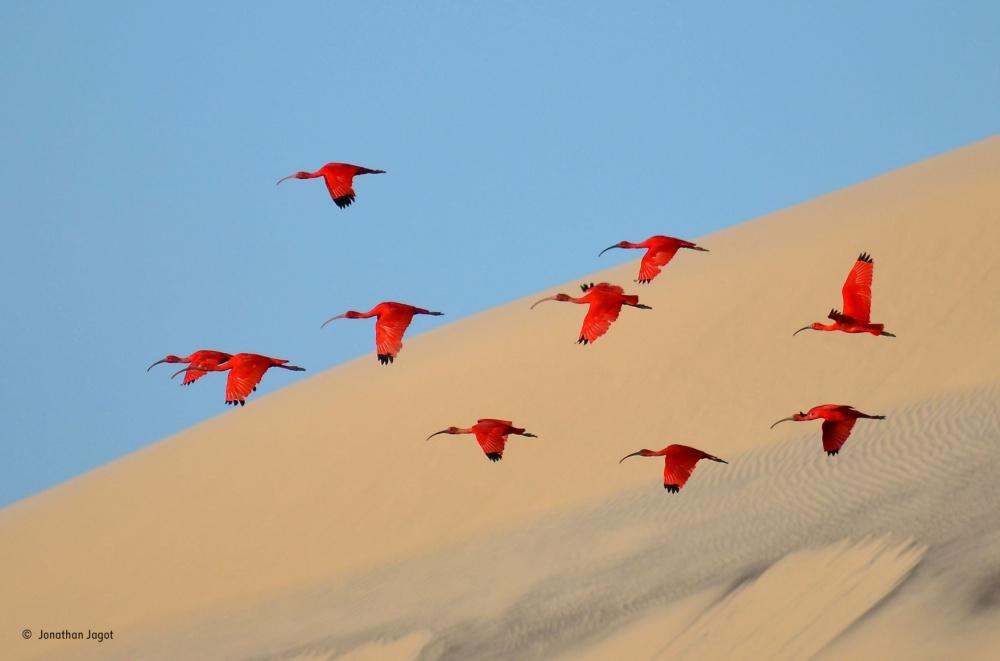 ТОП-15 фото дикой природы от Wildlife Photographer of the Year