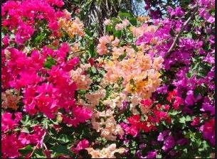 10 Gambar Bunga Kertas Berwarna Warni Gambar Bunga Indah