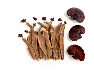 Ganoderma mushroom company in Telangana
