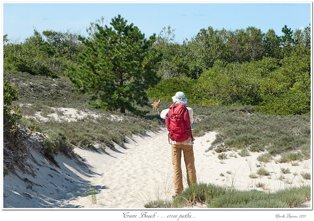 Crane Beach: ... cross paths...