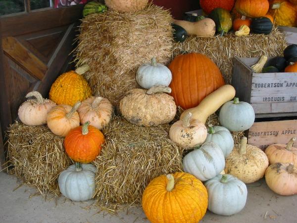 Lanark County Master Gardener Edible Garden Newsletter