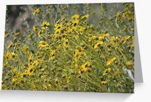 Brittle Bush 3 At Coachella Wildlife Preserve Greeting Card