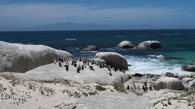 Boulders Beach, Travel Attraction, Tourist attraction, Best Places to see, Best Places to visit, Travel,