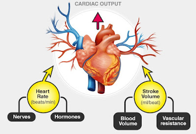 Hypertension |  Hypotension | Cardiac output, heart, human heart, circulation, blood Pressure