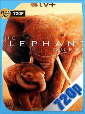 The Elephant Queen (2019) [Documental] HD[720P] latino[GoogleDrive] DizonHD