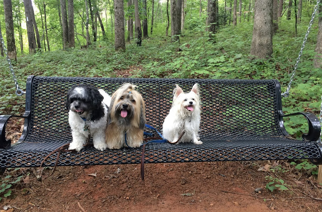 Hiking with dogs at Don Carter State Park #TailsonTrails #GaStateParks