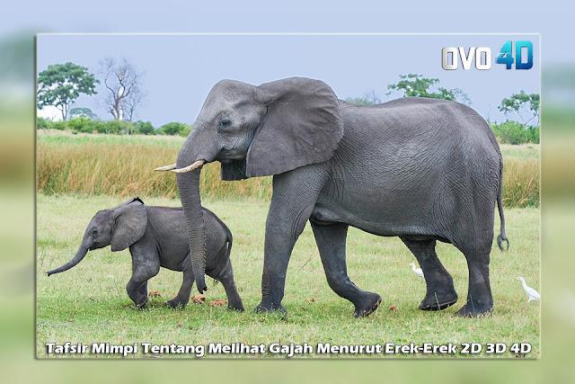 Tafsir Mimpi Tentang Melihat Gajah Menurut Erek-Erek 2D 3D 4D