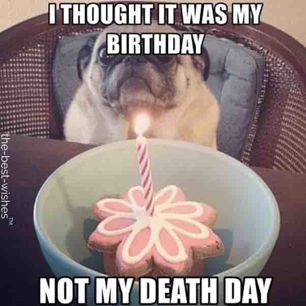 birthday pug hilarious memes not my death day
