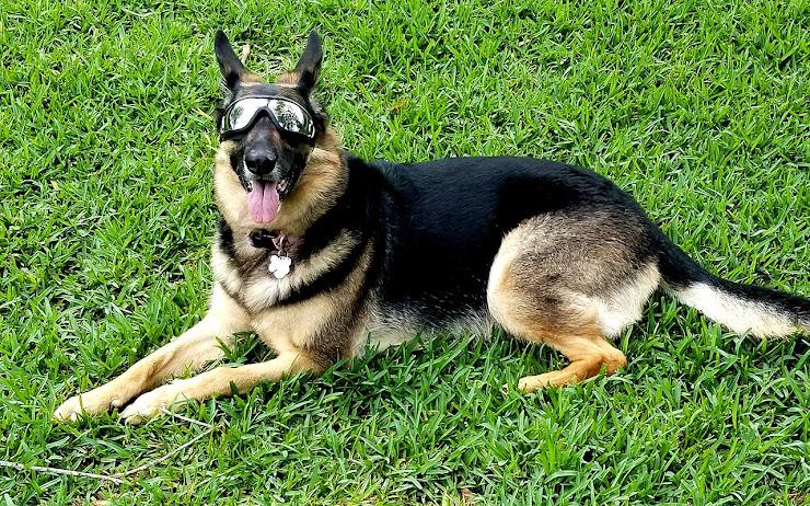 Doggles - negocio millonario