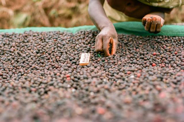 Munyinya - Burundi Coffee