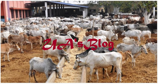 Breaking: Herdsmen finally realise, express readiness to embrace ranching