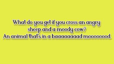 sheep jokes