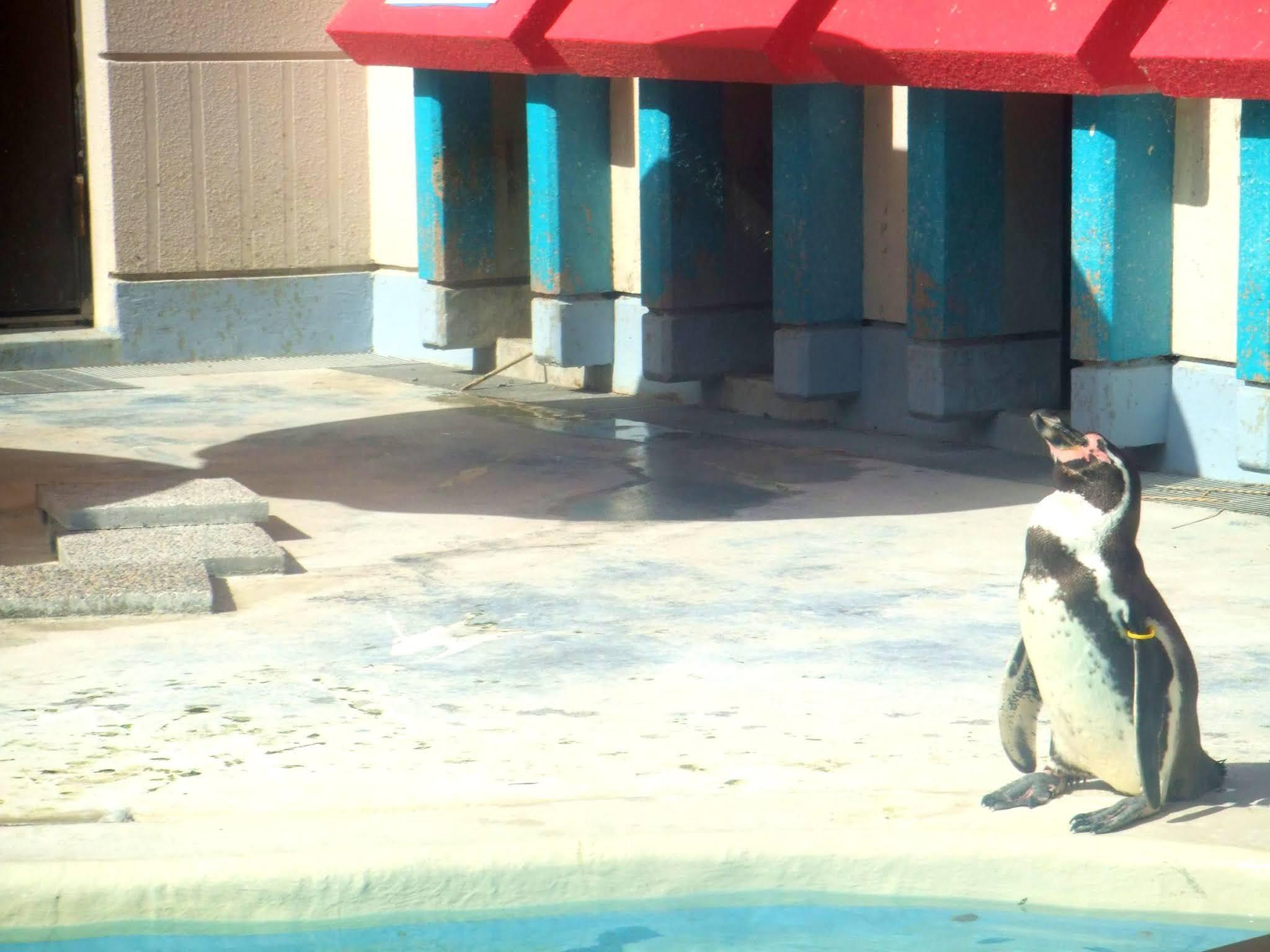 水族館 ペンギン 写真素材