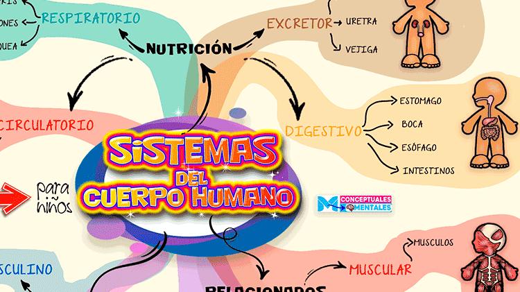 Mapa Mental del Cuerpo Humano para Niños con todos sus sistemas y partes