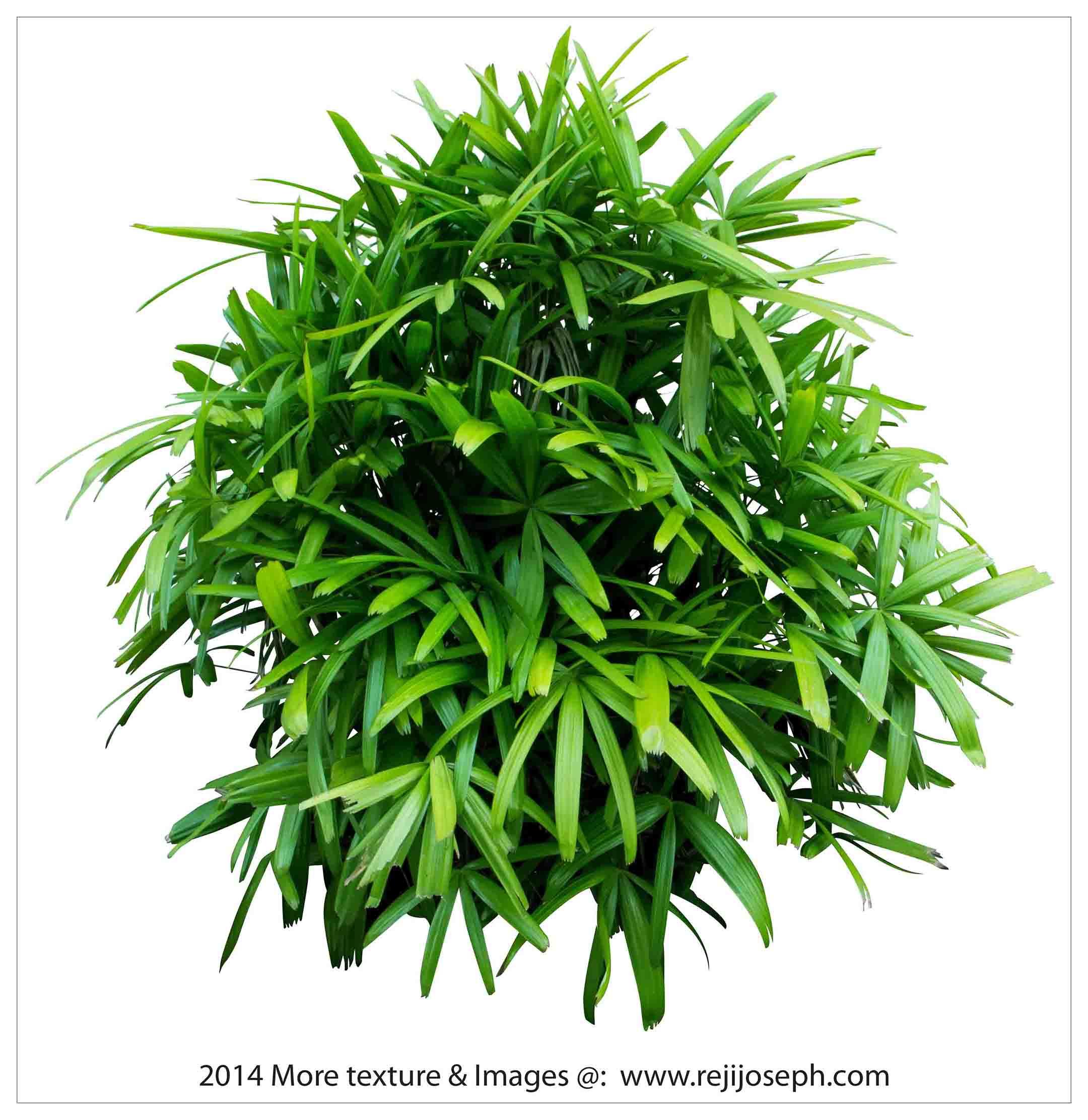 Garden plants texture 00016