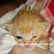 criar-gatitos-sin-madre