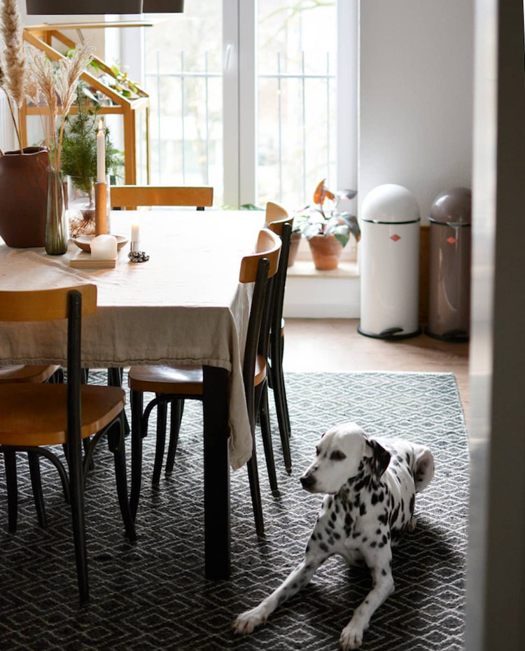 The Delightful Home of a Plant-Lover and a Darling Dalmation!