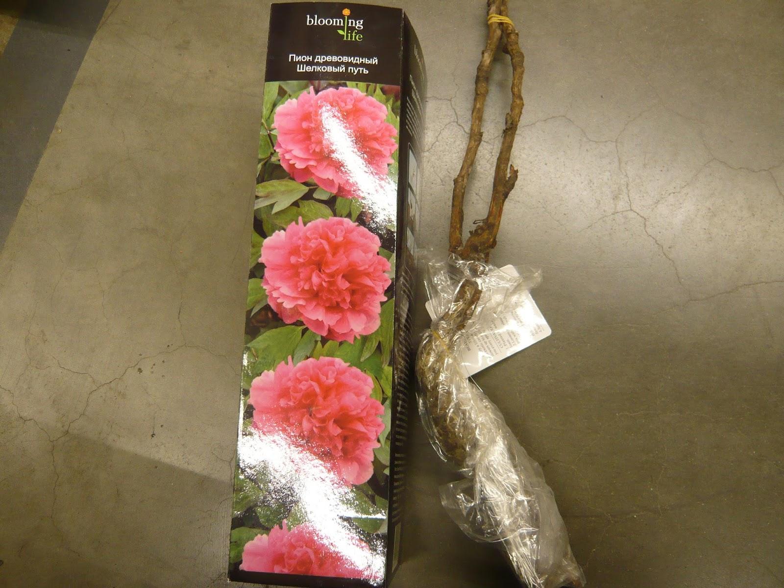 Цветы и семена в леруа мерлен