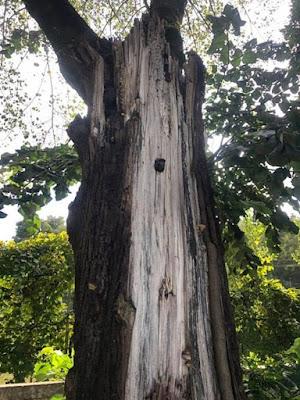 羽化天然木皮 成就唯美木箔