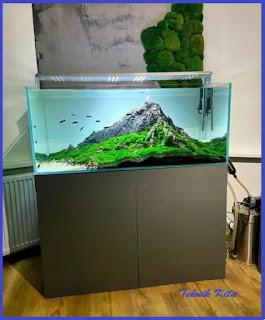 Mountain style aquascape