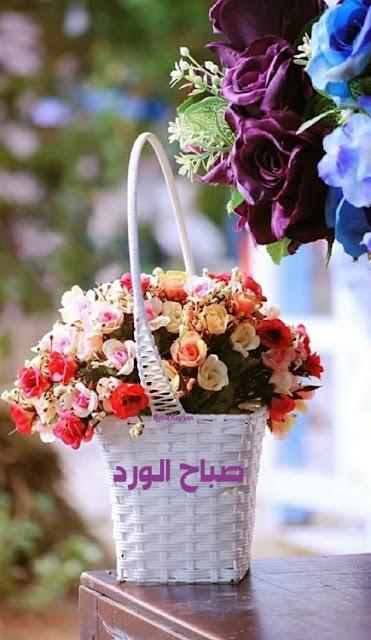 صباحية,الورد والفل والياسمين ,صباحك ورد,الورد والياسمين, مكتوب عليها, صباح الخير, صباح الورد