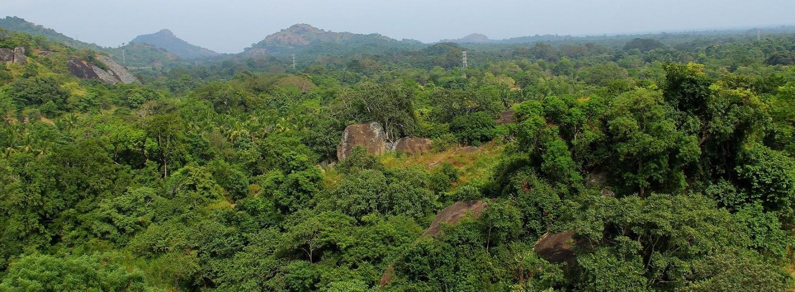 Rock outcrop habitat of Cnemaspis kotagamai sp. nov. at Bambaragala isolated forest hill, Ratnapura District, Sri Lanka