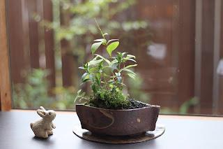 草もの盆栽 作品例 ギンミズヒキ、ササリンドウ他
