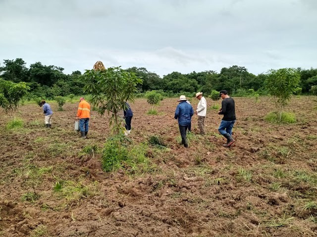 "SANTA RITA: Secretaria Municipal de Agricultura implanta o ""Pomar da Família"""
