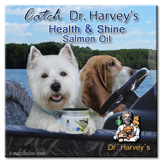 Westie and Basset in boat with salmon oil supplement canister from Dr. Harvey's