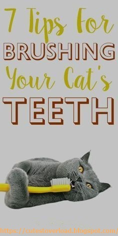 7 Tips For Brushing Your Cat's Teeth