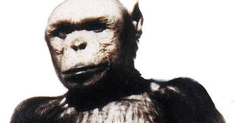 shukernature apeman oliver the chimp that made a