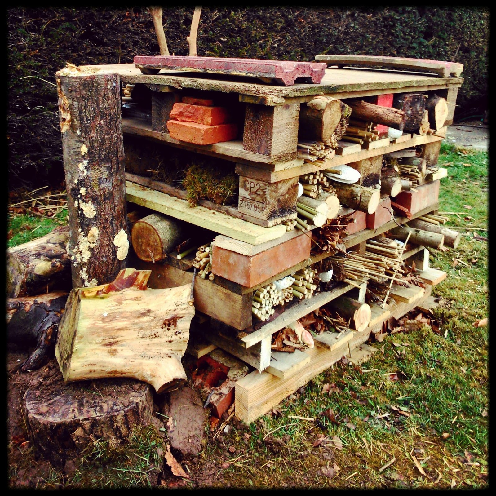 Beach House Park Bug Hotel - ready for guests