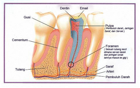 Kenapa Gigi Ngilu Bila Terkena Ais Atau Air Sejuk Dan Cara Merawatnya
