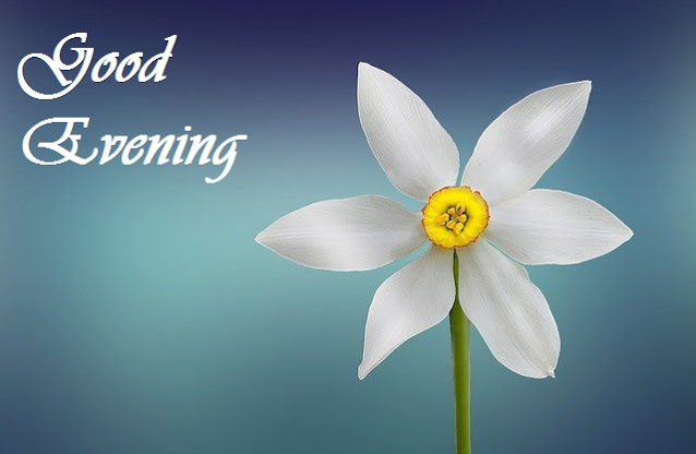 good evening flower wallpaper