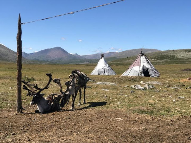 Melting Mongolian ice patches may threaten reindeer pastoralism, archaeological artefacts