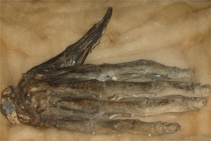 Tangan di Museum Whitby